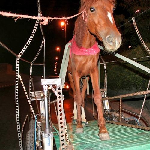 Тачка для лошади